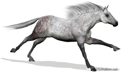 Equination.net Virtual Horse Racing Game