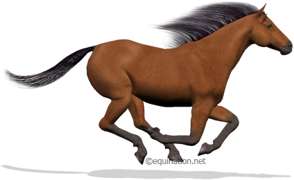 Equination.net - Virtual Horse Racing